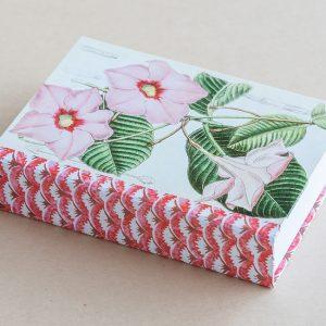 Jotter pad botanical diplodenia pink