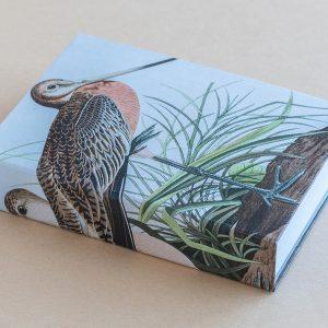 Jotter pad bird stork brown