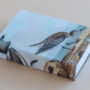 Jotter pad birds beach
