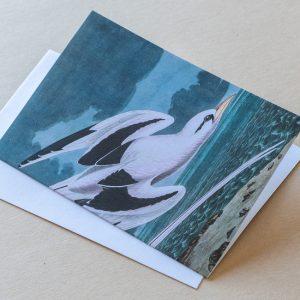 Greeting Card – Bird Seagulls 10