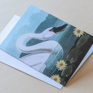 Greeting Card –  Bird Swan 12