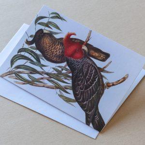 Greeting Card – Birds Parrots 19