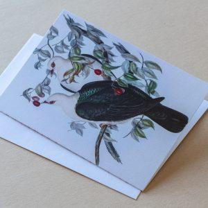Greeting Card – Birds Pigeons 20