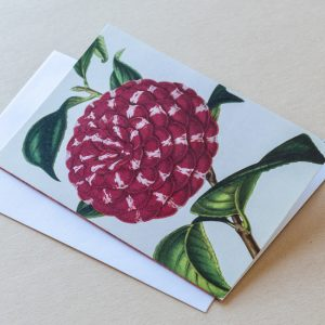 Greeting Card – Camellia Red 34