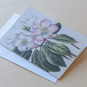 Greeting Card – Christmas Rose 03