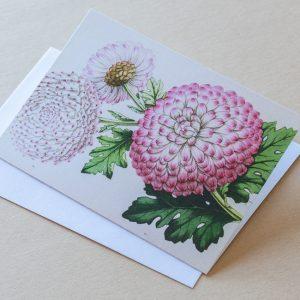Greeting Card – Chrysanthemum pink 04