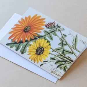 Greeting Card – Daisies 06