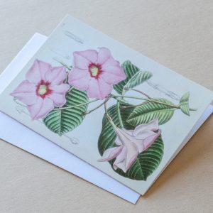 Greeting Card – Diplodenia Pink 08