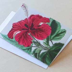 Greeting Card – Hibiscus Red 09