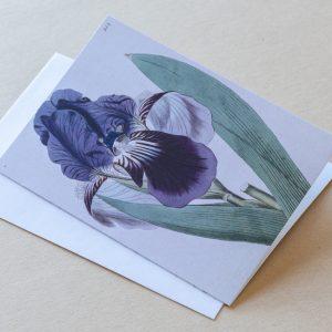 Greeting Card – Iris Purple 10