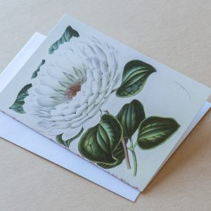 Greeting Card – Lilly White 13