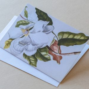 Greeting Card – Magnolia White 14
