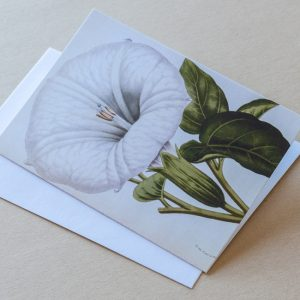 Greeting Card – Moon Flower White 15