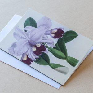 Greeting Card – Orchid Purple 16