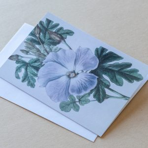 Greeting Card – Pansy Purple 32