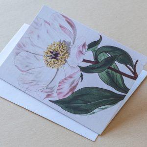 Greeting Card – Poppy Pink 18