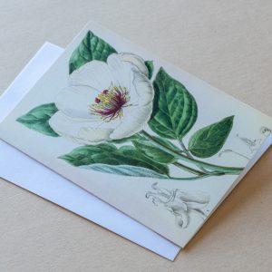 Greeting Card – Poppy White 21