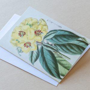 Greeting Card – Primrose Yellow 25