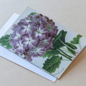 Greeting Card – Primrose Purple 22