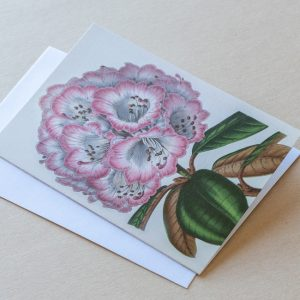 Greeting Card – Rhododendron Pink 23