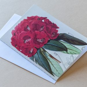 Greeting Card – Rhododendron Red 33