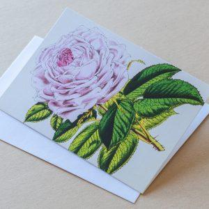 Greeting Card – Rose Pink 35