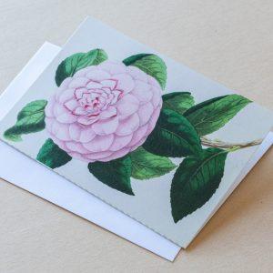 Greeting Card – Rose Pink 26