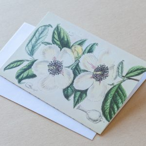 Greeting Card – Roses White 28
