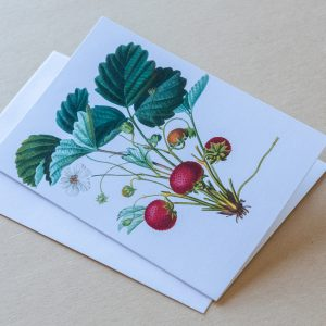 Greeting Card – Strawberries 03