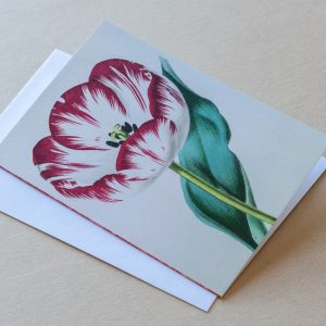 Greeting Card – Tulip Red 29