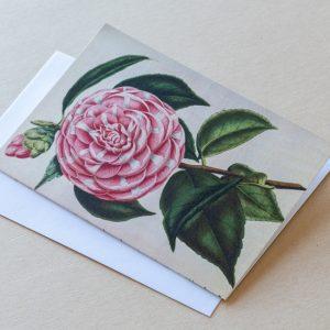 Greeting Card – Camellia Pink 02
