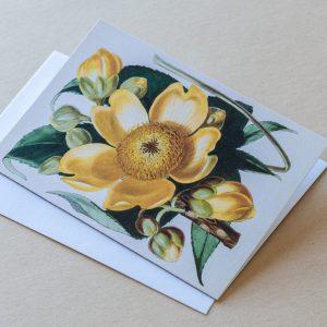 Greeting Card – Cotton Tree Flower Yellow 31