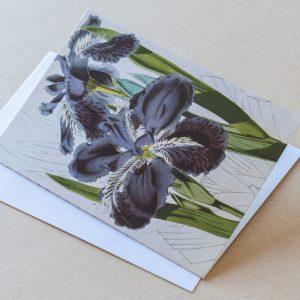 Greeting Card – Irises Purple 11