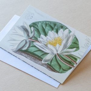 Greeting Cards – Lillies White 12